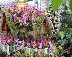 Юбилейный фестиваль орхидей в Kew Gardens
